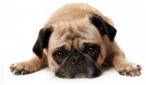 Flea And Tick Drops Could Be Harming Your Animals and Your Children
