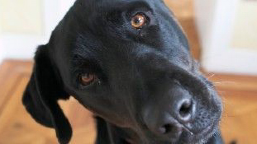 What Some Vets Have To Say On Nutrition For Dogs.