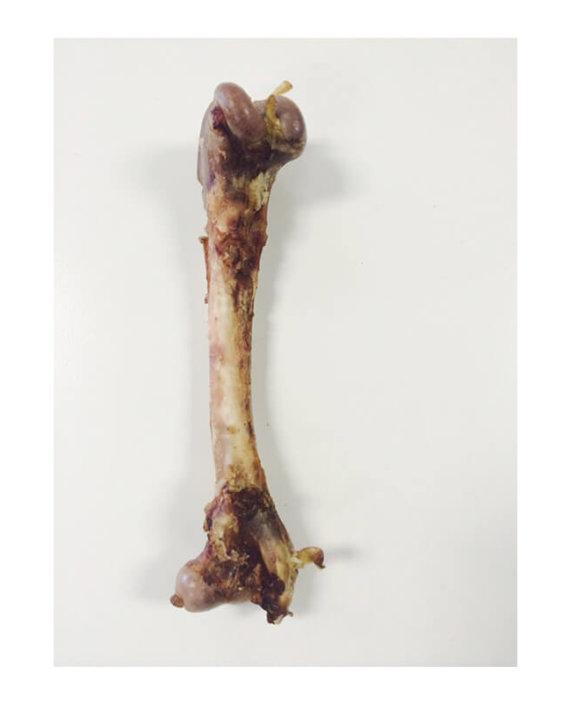 Springbok Bone