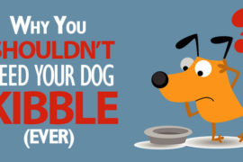 Kibble/pellet food is not an appropriate diet for your pet