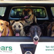 tears-animal-rescue-1