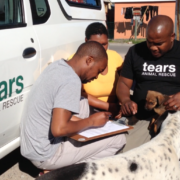 tears-animal-rescue-2
