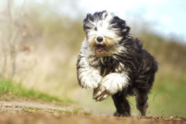 Three 'S' signs to determine your pet's health