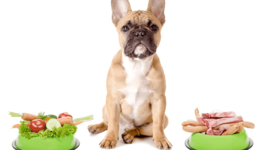 The most important read – Is your Dog an Omnivore or Carnivore?