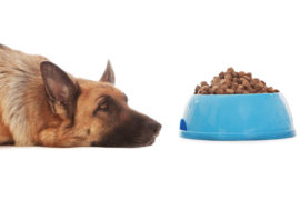 Kibble/pellet food is neither palatable nor tasty