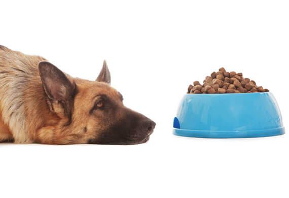 Kibble/pellet food is neither palatable nor tasty