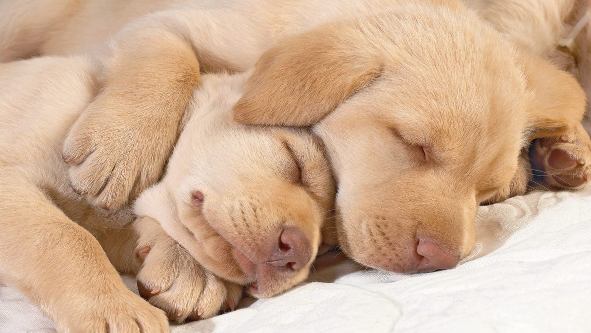 Puppies – GODS gift to man