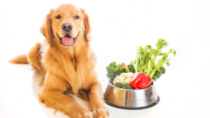 Adult dogs and cats – feeding and supplementation