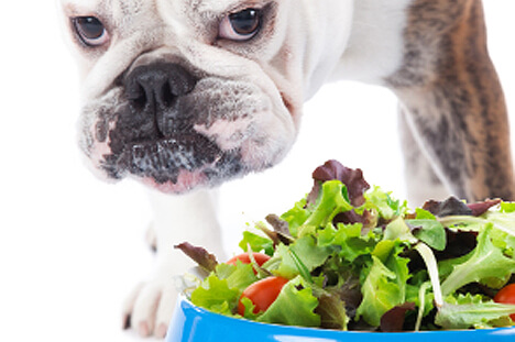 Can your dog be a vegetarian?