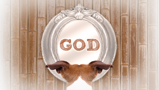Dog spelt backwards is GOD