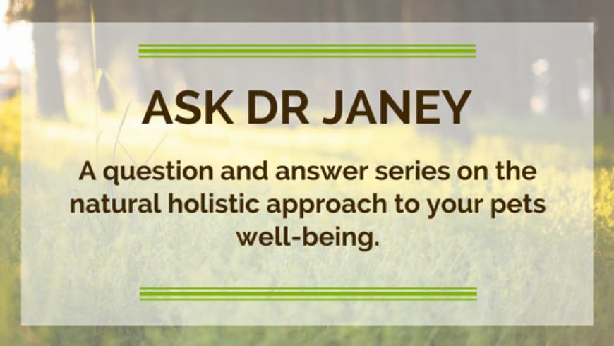 Ask Expert Vet Dr Janey