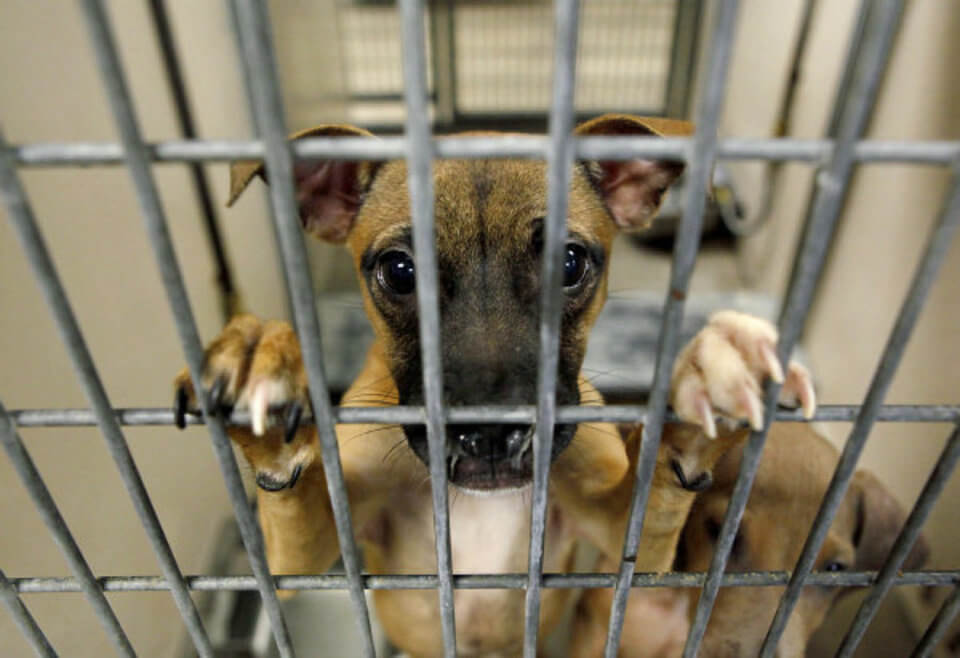 Does business have an obligation to support animal welfare?