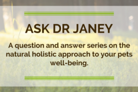 Dr Janey's Pet Health Series – Episode 5: the most crucial supplement you can give your pet!