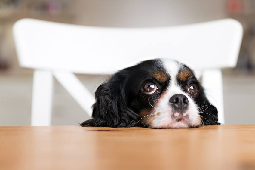 The no-no's when feeding your pet