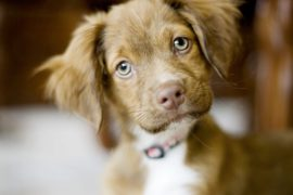 A new family member – now what?? Paul discusses responsible pet ownership on Smile FM