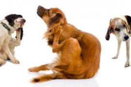 How to stop your dog itching in 30 days 👍👍