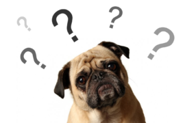 Paul on Smile FM – common misconceptions when feeding our pets