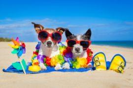 Tips for an African summer!