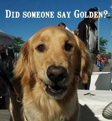 What is the golden rule when feeding your pets?