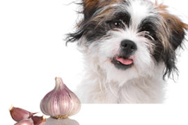 How much garlic is safe for your dog?