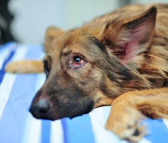 How to Treat Pancreatitis in Dogs