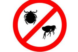 Dr Janey's Pet Health Summer Series – Episode 20: Maximum impact on those fleas!