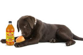 Dr Janey's Pet Health Summer Series – Episode 24: Apple cider vinegar for your pets