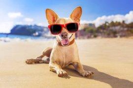 Dr Janey's Pet Health Summer Series – Episode 25: Hot spots ~ a summer health hazard!