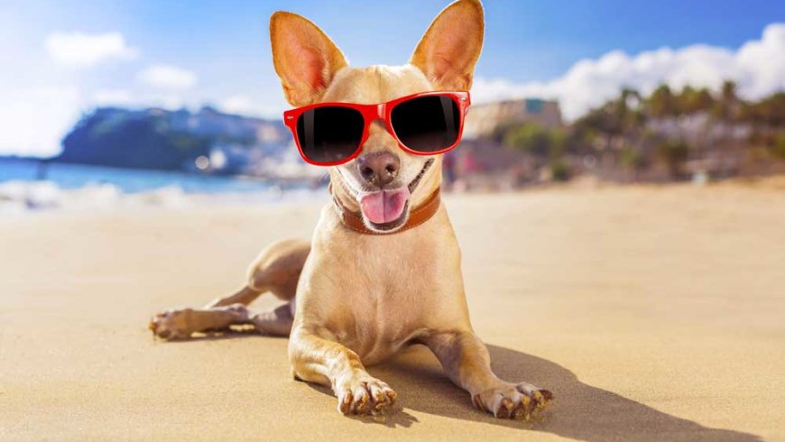 Dr Janey's Pet Health Summer Series – Episode 25: Hot spots ~ a summer health hazard!