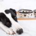 Why has my dog or cat suddenly lost their appetite? Paul discusses this subject on Smile FM radio