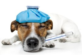 Dr Janey's Summer Health Pet Series – Episode 28: Antibiotics & the Superbug!