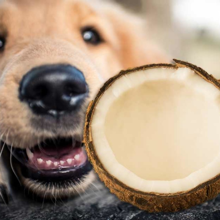 Paul on Smile FM…coconut oil vs. fish oil – why are both essential for you & your pet?