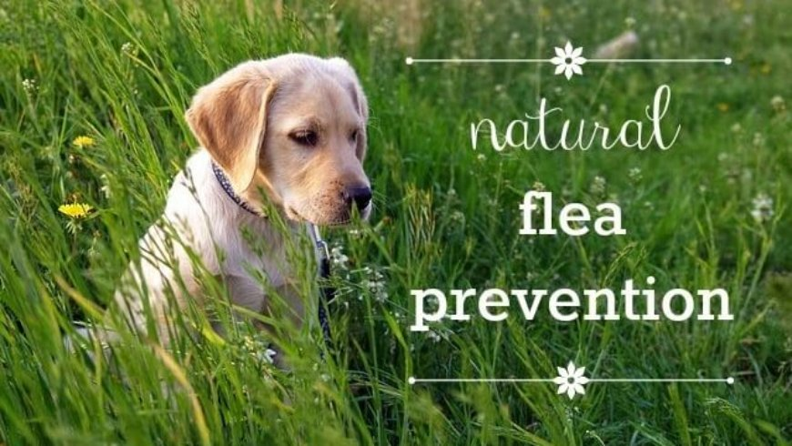Ticks & fleas – Paul discusses natural & effective remedies on Smile FM Radio