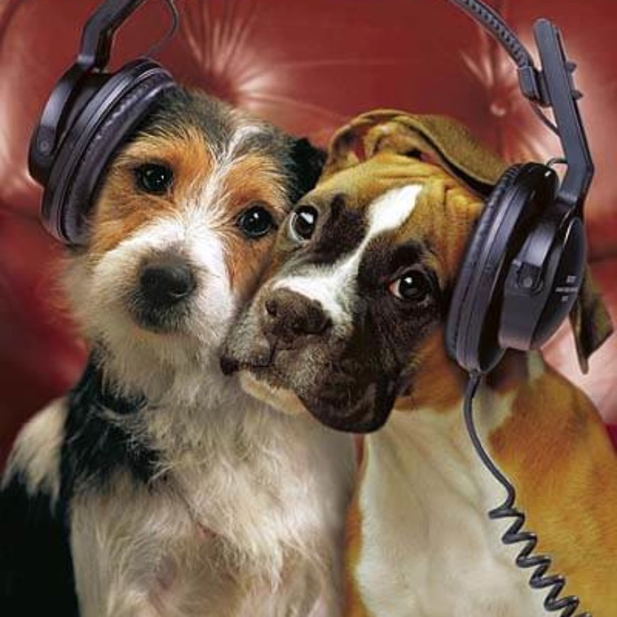 Paul from Vondis Holistic Pet Nutrition answers commonly asked questions on Smile FM Radio