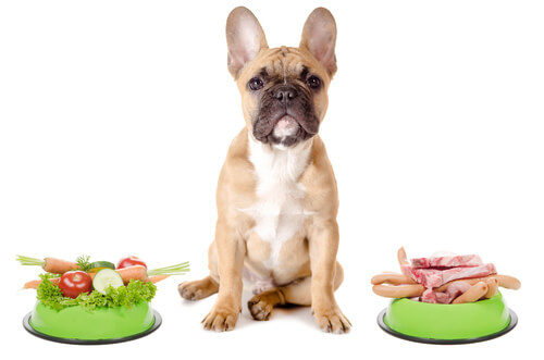 Is your dog an omnivore or a carnivore?