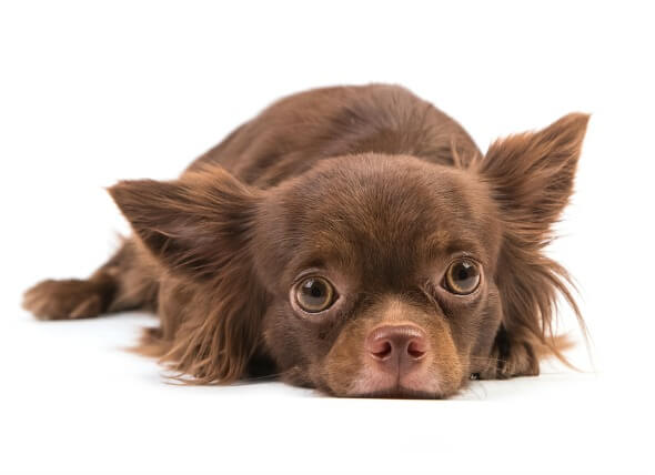 Caring For Dogs With Kidney Disease
